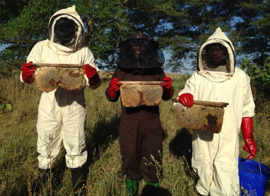 In Tanzania, a Beekeeping Project Revitalizes a Community